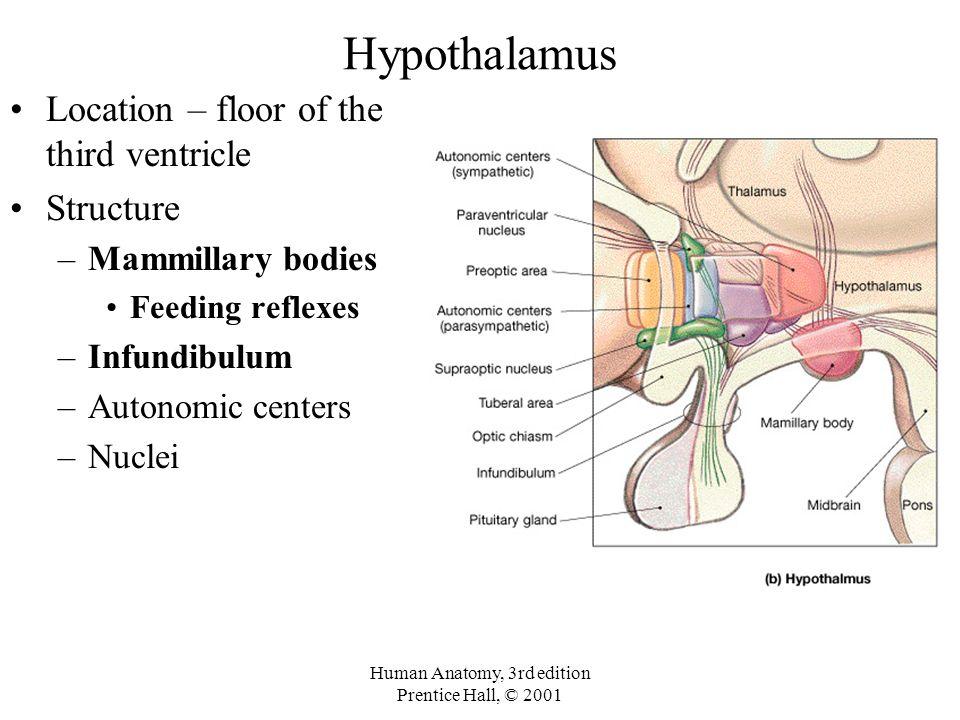 Third Gender Anatomy 1411060 Togelmayafo