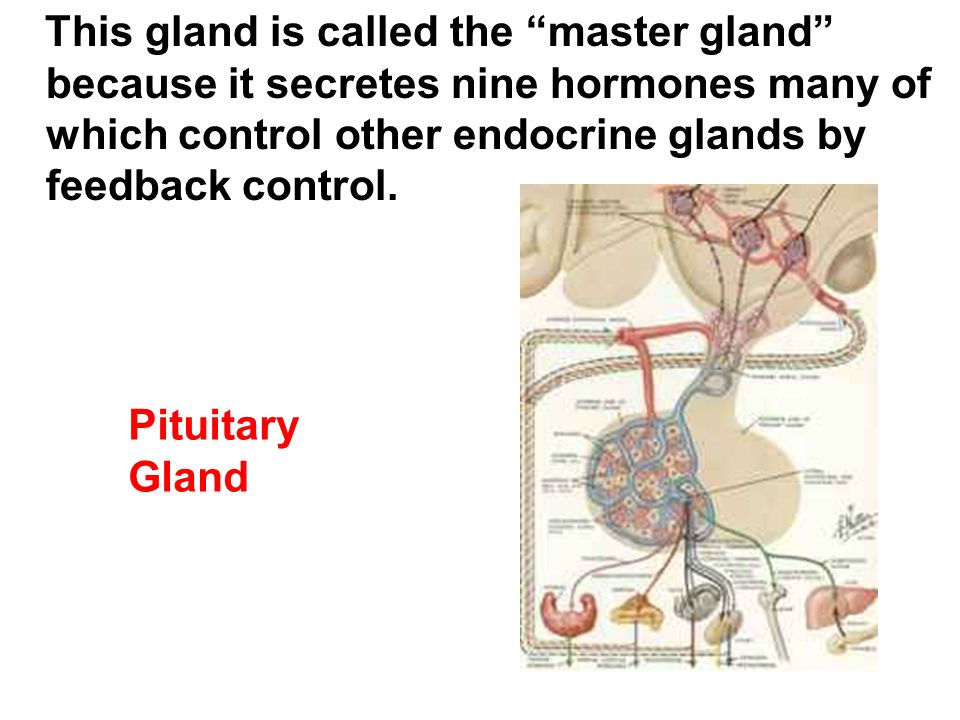The Endocrine System AP Chapter ppt video online download