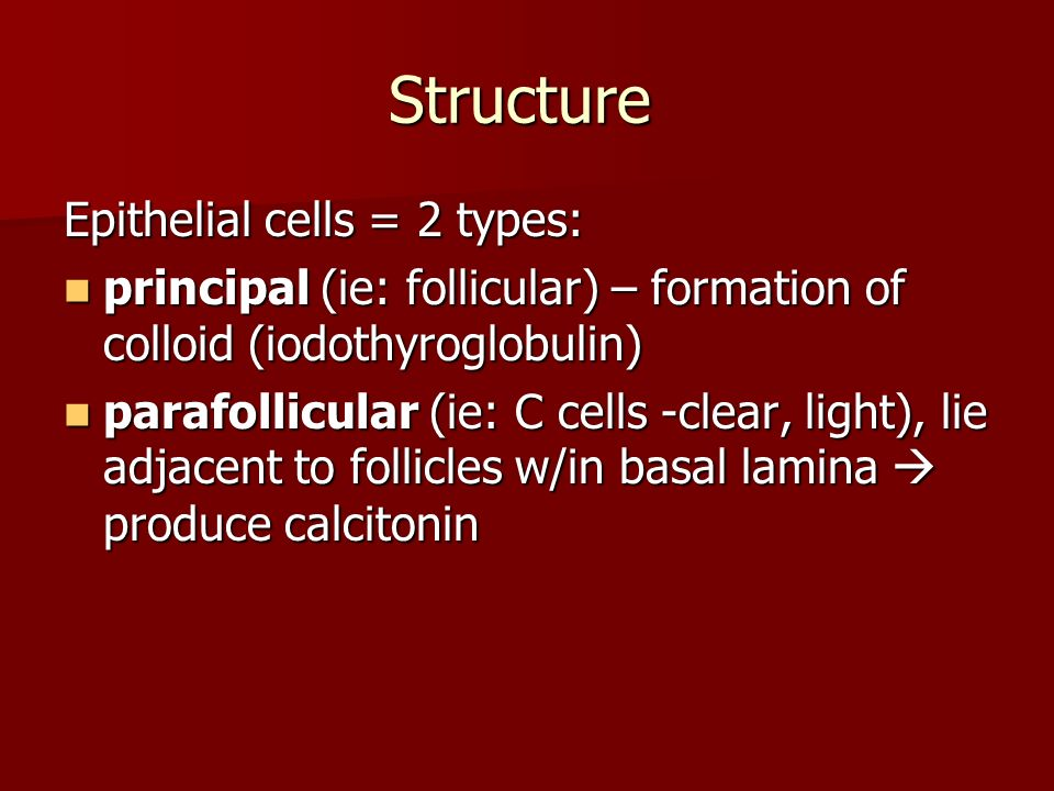 Structure Epithelial cells = 2 types: