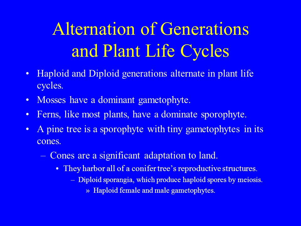 Alternation of Generations and Plant Life Cycles - ppt ...