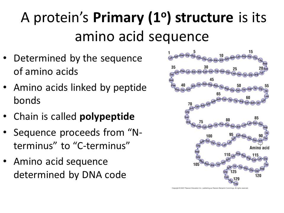 structure of amino acids pdf