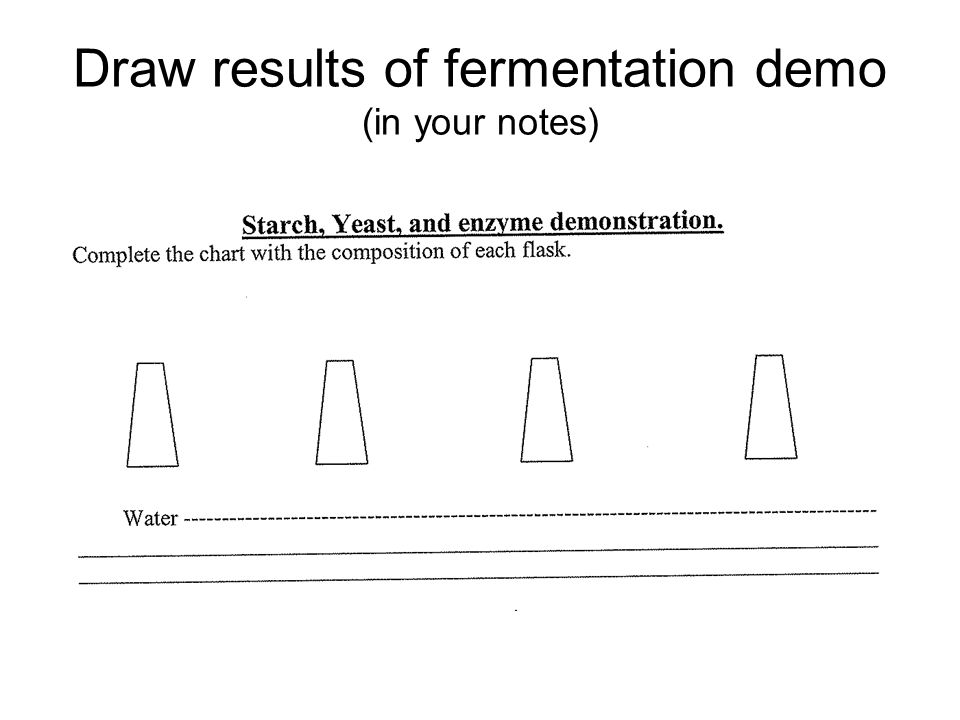 fermentation notes Notes on fermentation nofa conference workshop 1/25/2014 sauerkraut & kimchi updated feb 7, 2014 general lactobacillus plantarum is the beneficial bacteria being .