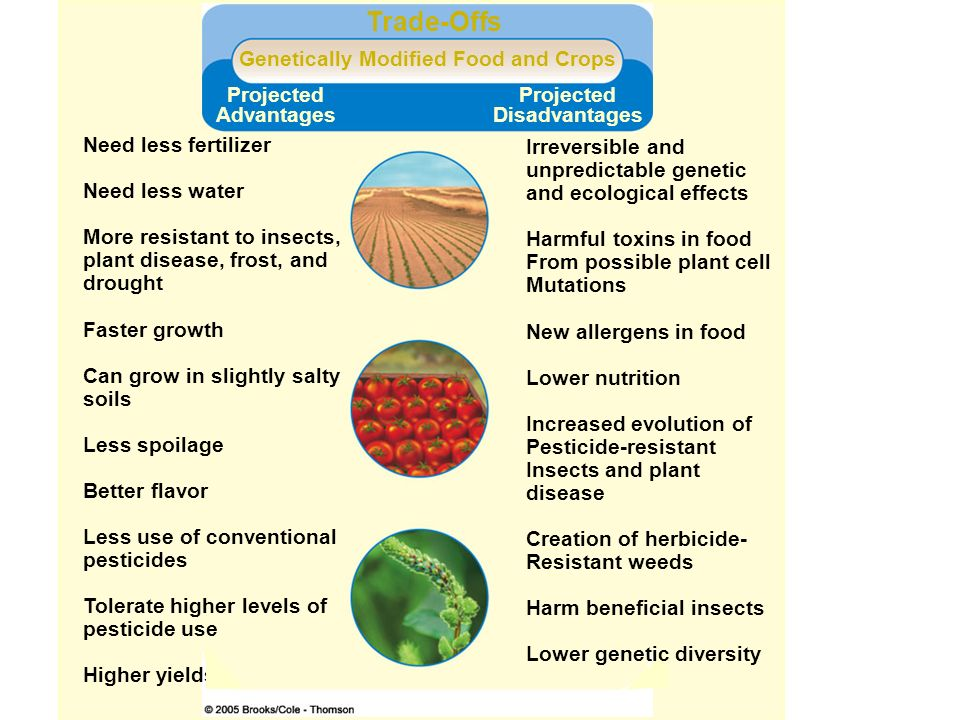 herbicide resistant genetically modified crops are not safe for consumption Although genetically modified food, including that produced from herbicide-resistant crops, appears to be safe in all the tests that have been conducted so far, it is possible that there will be .