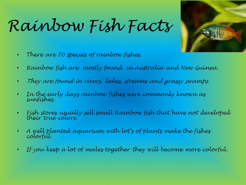Rainbow fish rohit pillai ppt video online download for Facts about fishing