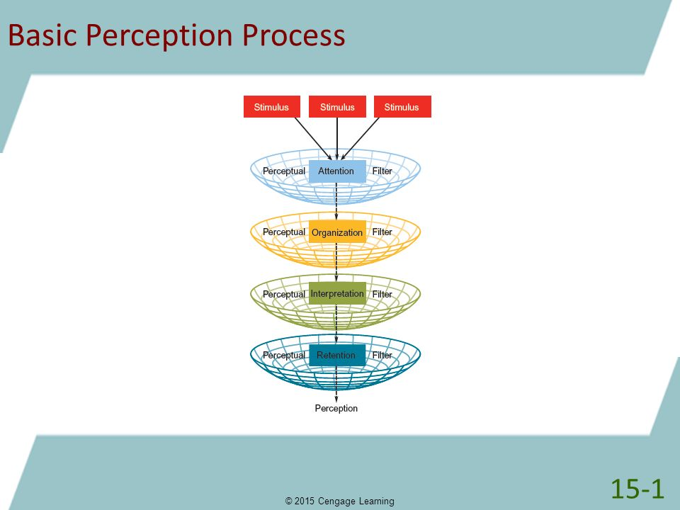 How does perception affect the organizational process education essay
