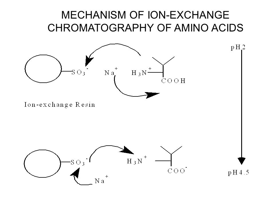 """chromatography and the identification of amino acids Paper chromatography of amino acids f prior to lab you should: • make sure you: o know the relationship between proteins and amino acids o know the """"conserved region"""" of."""