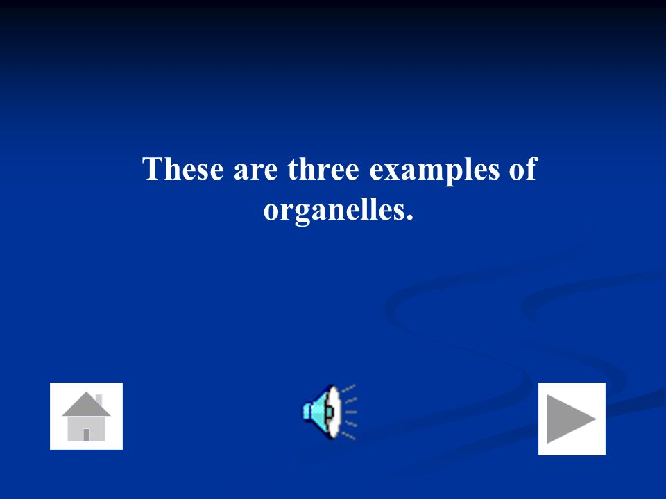 These are three examples of organelles.