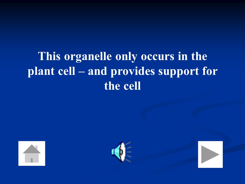 This organelle only occurs in the plant cell – and provides support for the cell