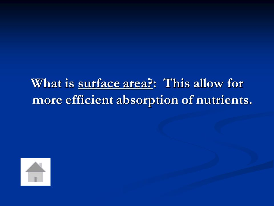 What is surface area : This allow for more efficient absorption of nutrients.