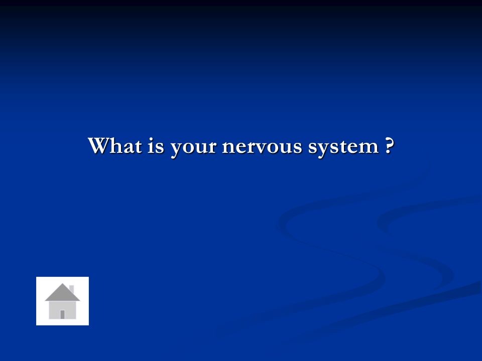 What is your nervous system