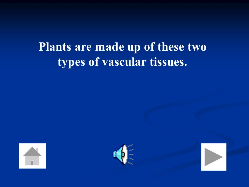 Plants are made up of these two types of vascular tissues.