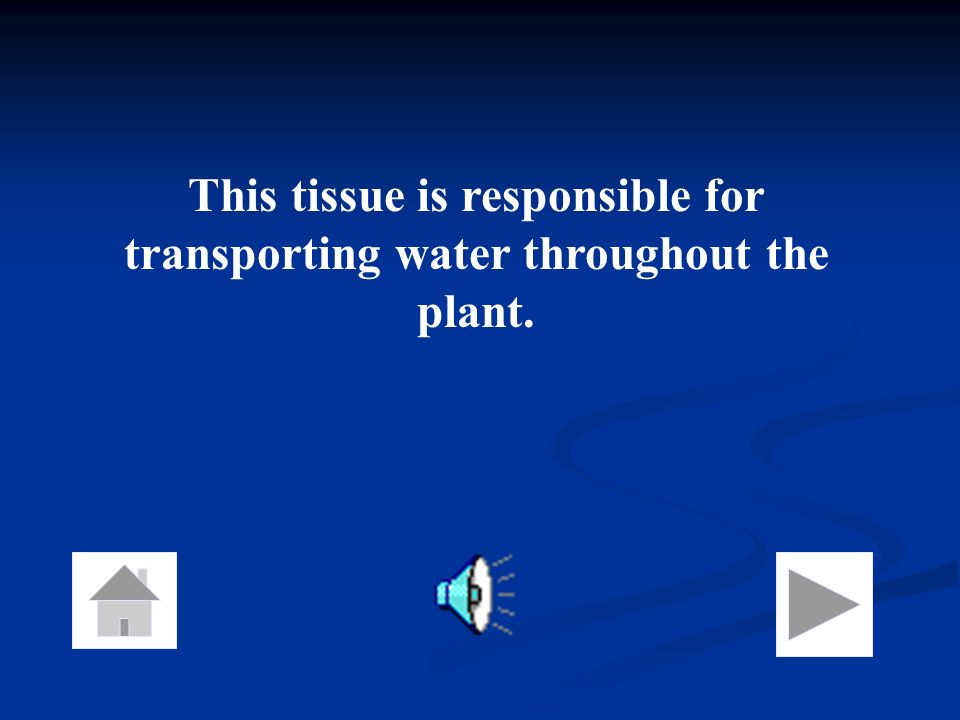 This tissue is responsible for transporting water throughout the plant.