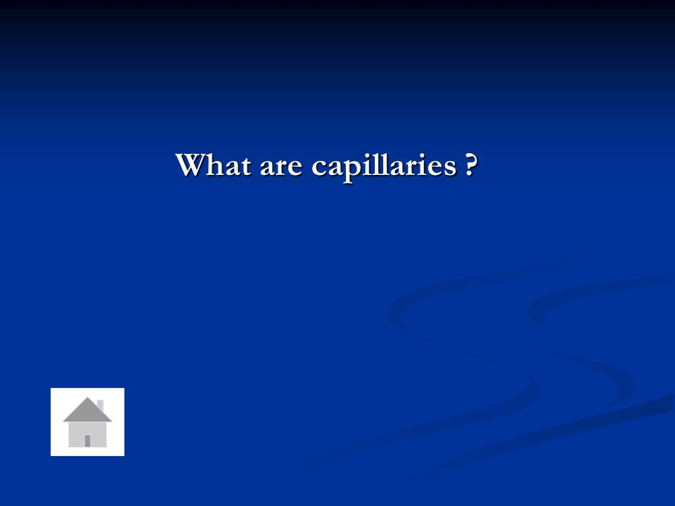 What are capillaries
