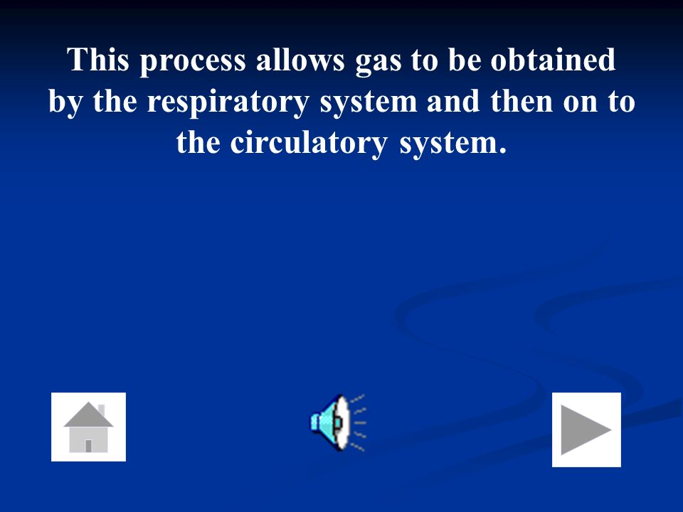 This process allows gas to be obtained by the respiratory system and then on to the circulatory system.