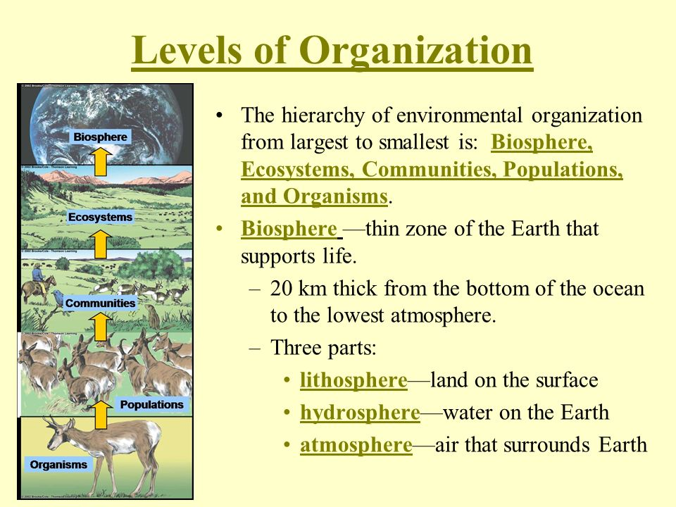 Chapter 18: Introduction to Ecology - ppt download