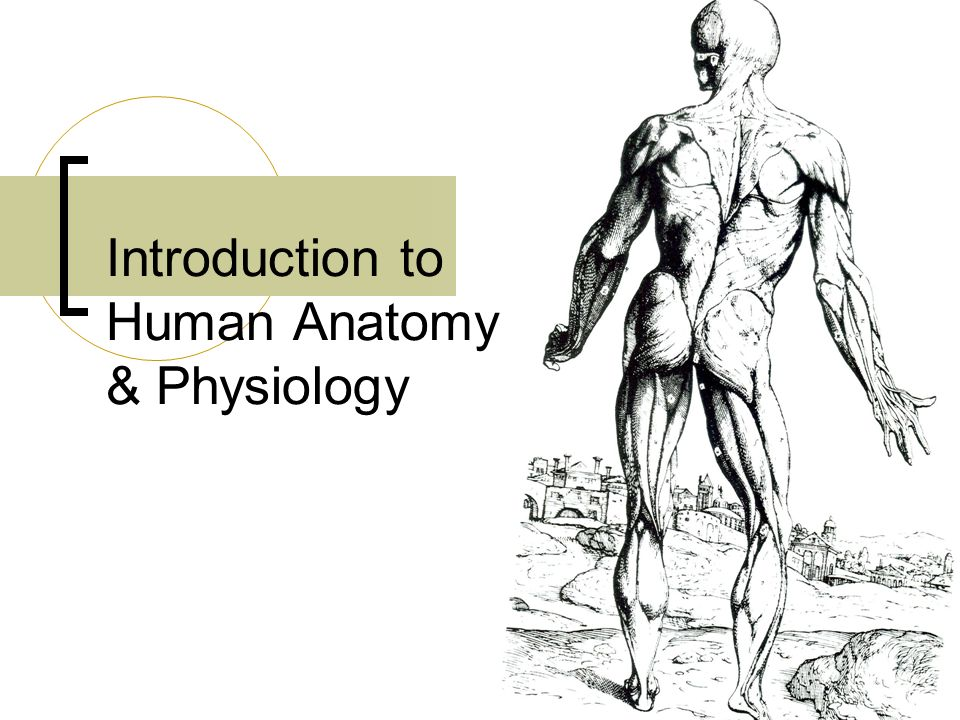 Nett Introduction To Human Anatomy And Physiology Bilder ...