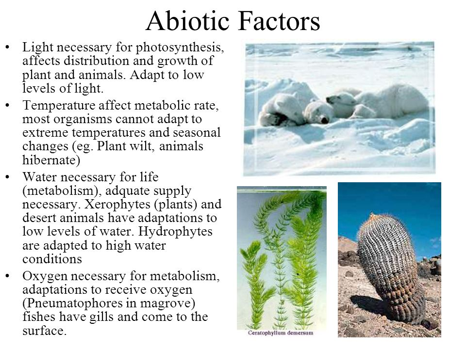 factors affecting animal growth The capacity of an animal to produce differs between species, breeds and strains as a result of genetic factors however, a complex of inter-related factors in the animal husbandry will influence the animal's ability to utilize that capacity for growth, development and production progress in.