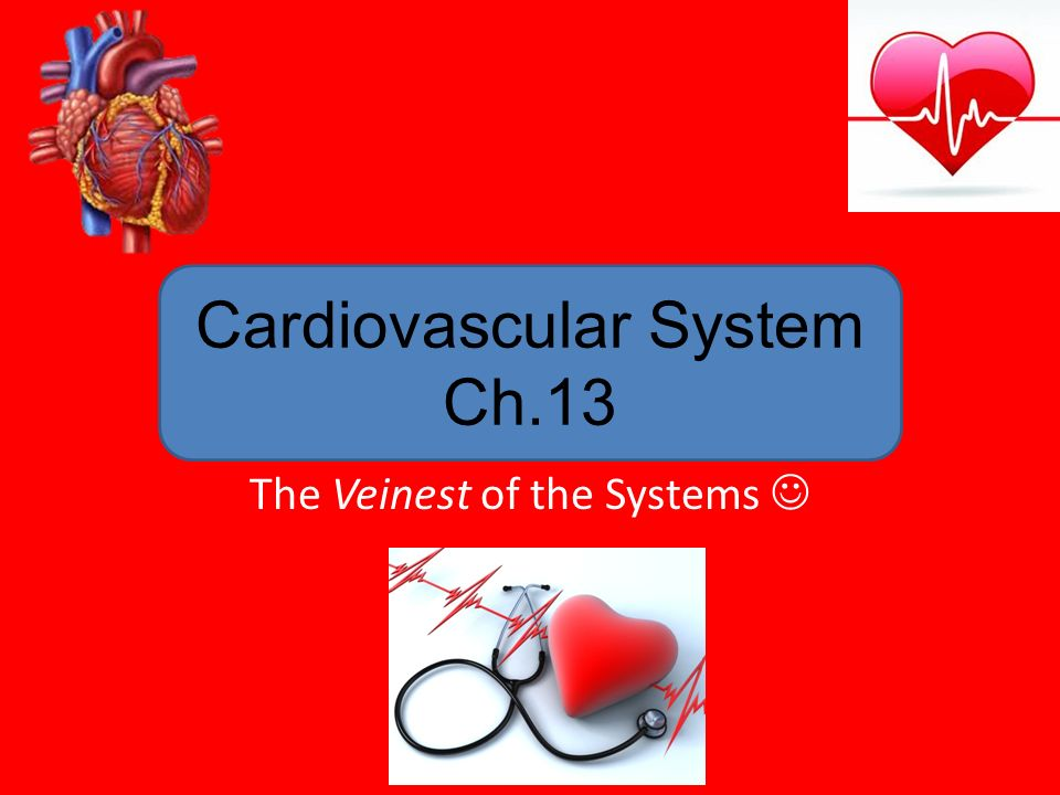 Cardiovascular system blood vessels worksheet answers