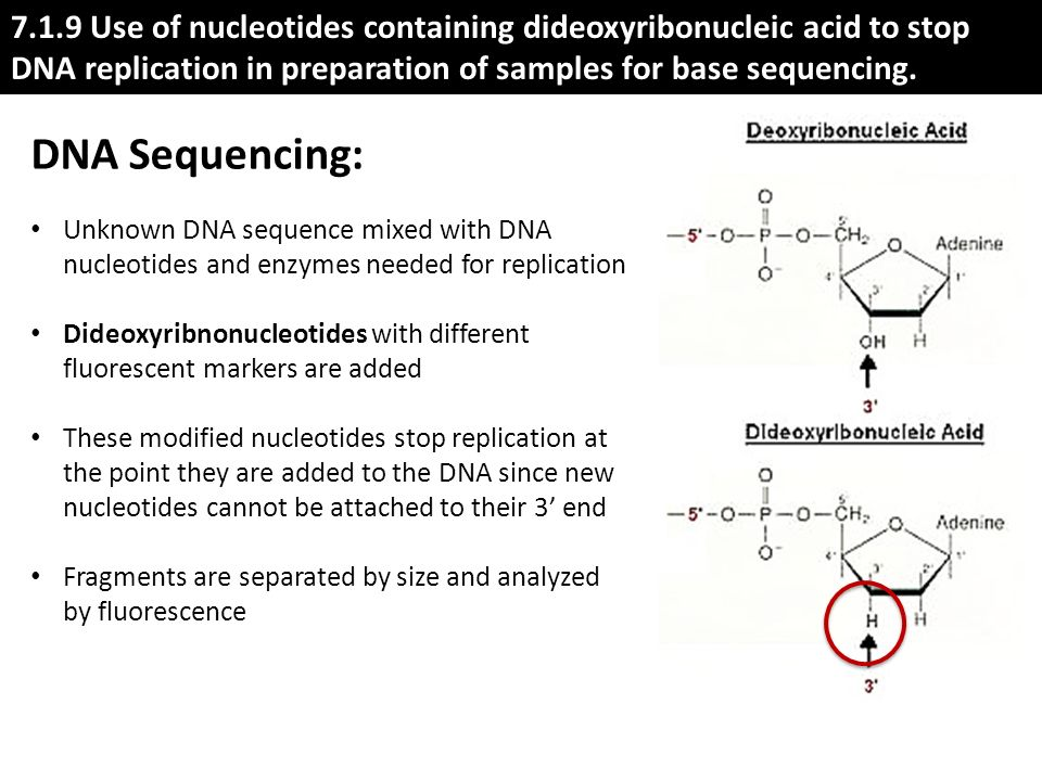 how to change rna sequence nucleotides