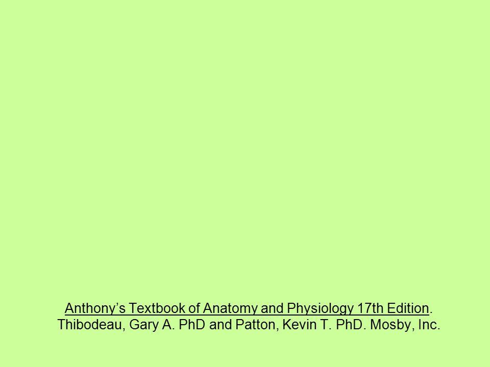Hermosa Anatomy And Physiology Patton Pdf Colección - Anatomía de ...