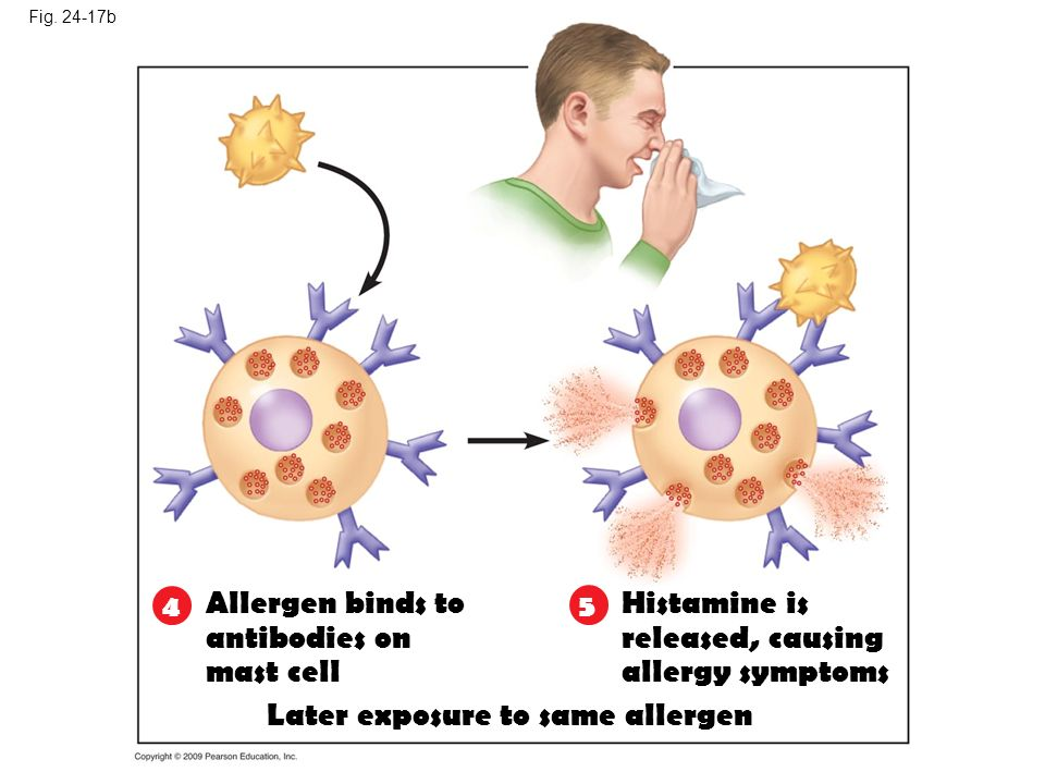 Later exposure to same allergen