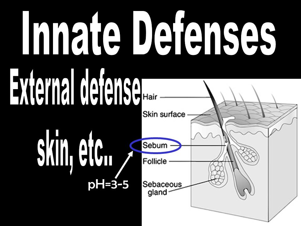 Innate Defenses External defense skin, etc.. pH=3-5
