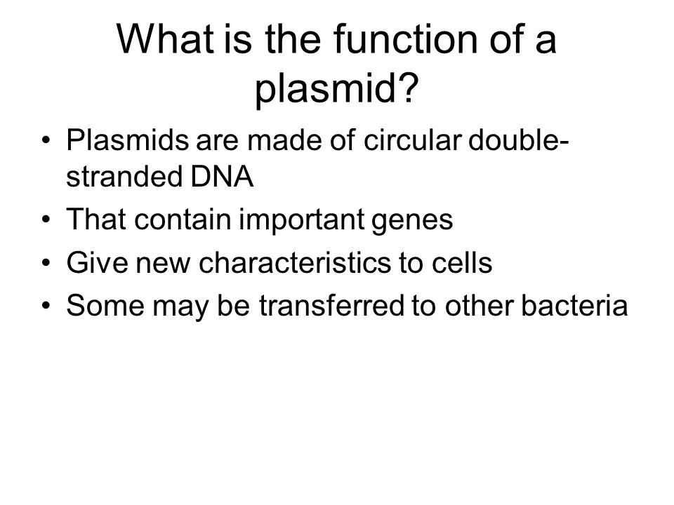 the main characteristics of dna and its functions The genetic material must exhibit four characteristics • for a molecule to serve as the genetic material, it must be able to replicate, store information, express information, and allow variation by mutation • the central dogma of molecular genetics is that dna makes rna, which makes proteins (figure 101) • the genetic material is physically transmitted from parent to offspring.
