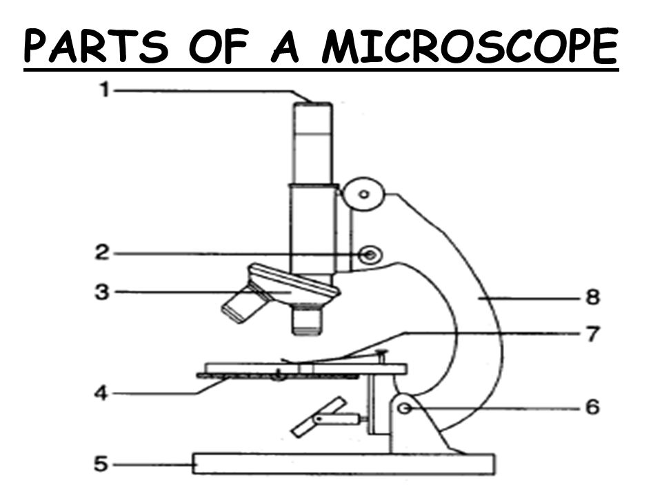 parts of the microscope Arm - part of the microscope that you carry the microscope with connects the head and base of the microscope 6 coarse adjustment knob - large, round knob on the side of the microscope used for rough focusing of the specimen it may.