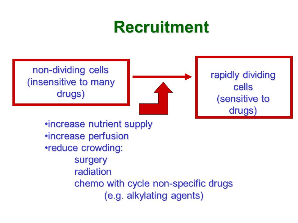 Recruitment non-dividing cells (insensitive to many drugs)