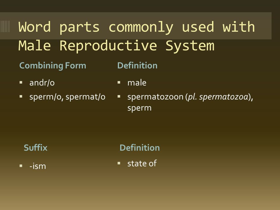 Chapter 7: Male Reproductive System - ppt download