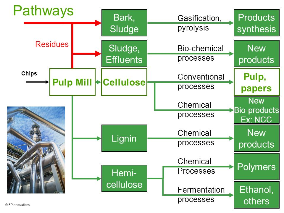 Pathways Products synthesis Bark, Sludge New products Sludge,
