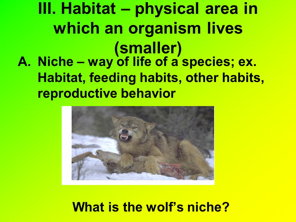 III. Habitat – physical area in which an organism lives (smaller)