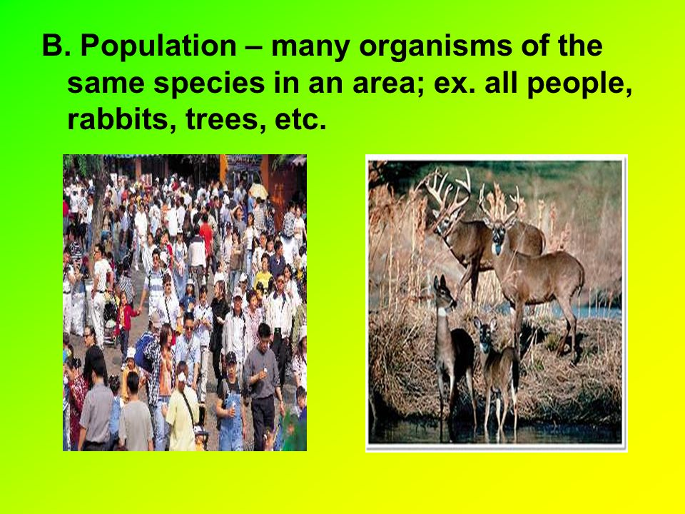 B. Population – many organisms of the same species in an area; ex