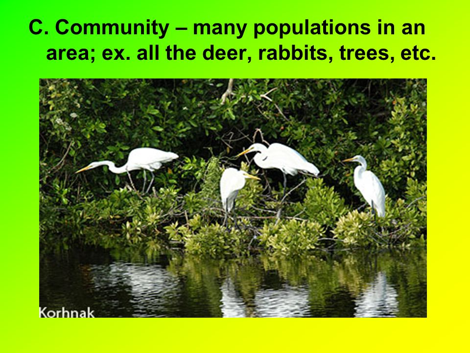 C. Community – many populations in an area; ex