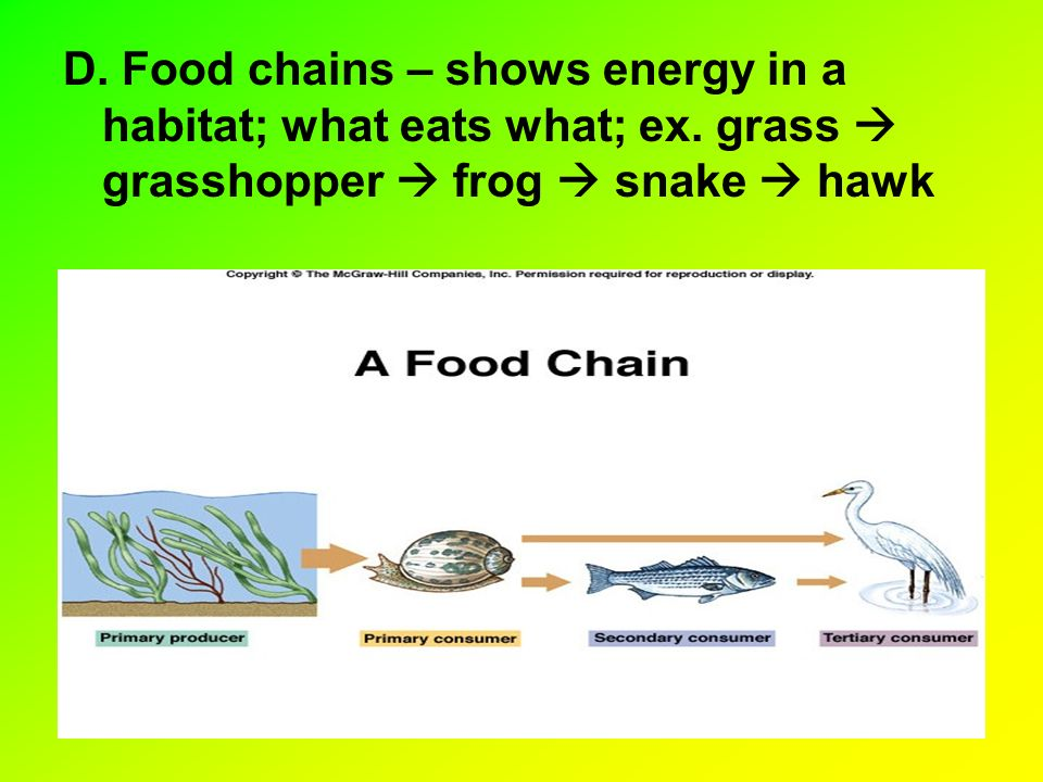 D. Food chains – shows energy in a habitat; what eats what; ex