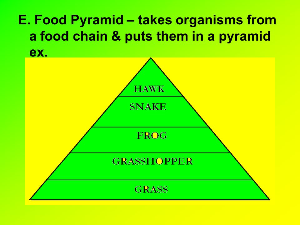 E. Food Pyramid – takes organisms from a food chain & puts them in a pyramid ex.