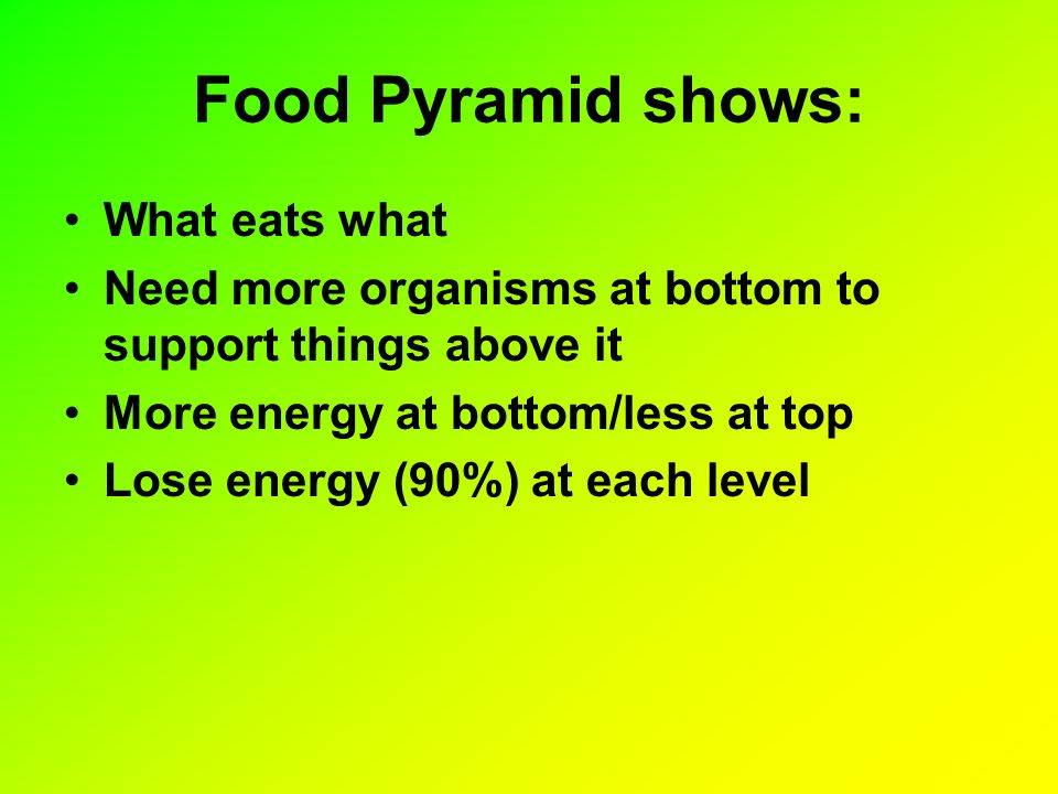 Food Pyramid shows: What eats what