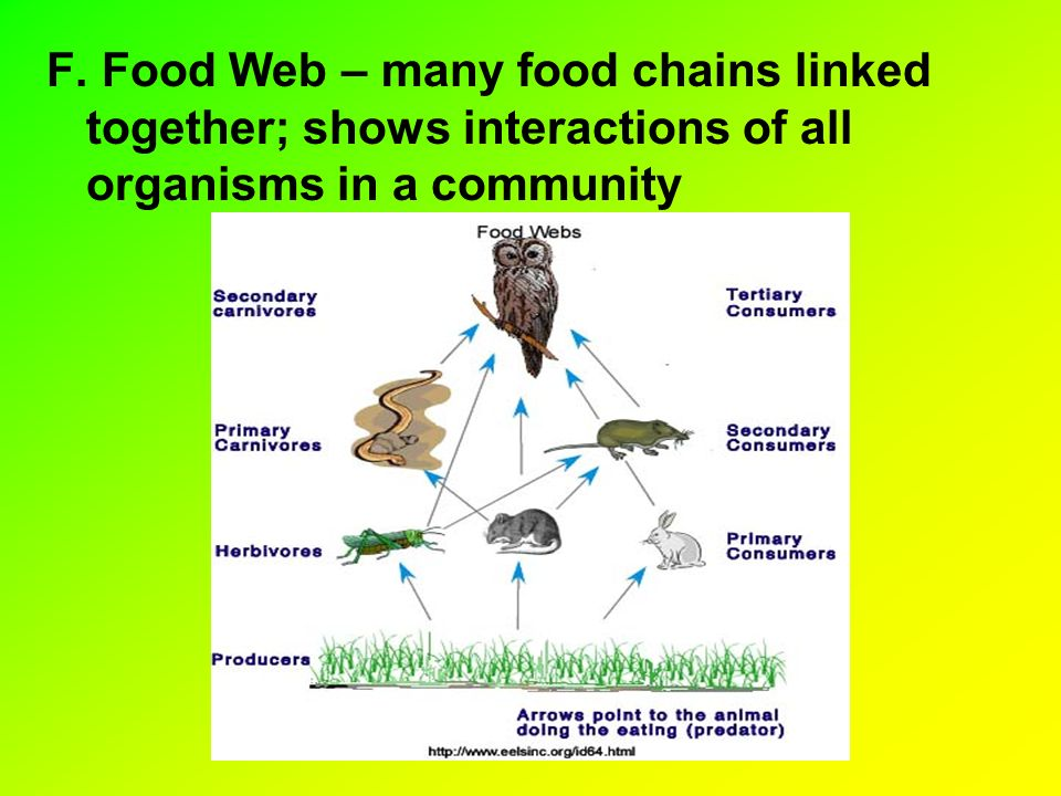 F. Food Web – many food chains linked together; shows interactions of all organisms in a community