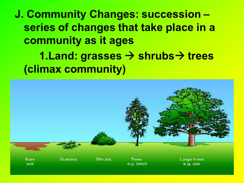 J. Community Changes: succession – series of changes that take place in a community as it ages