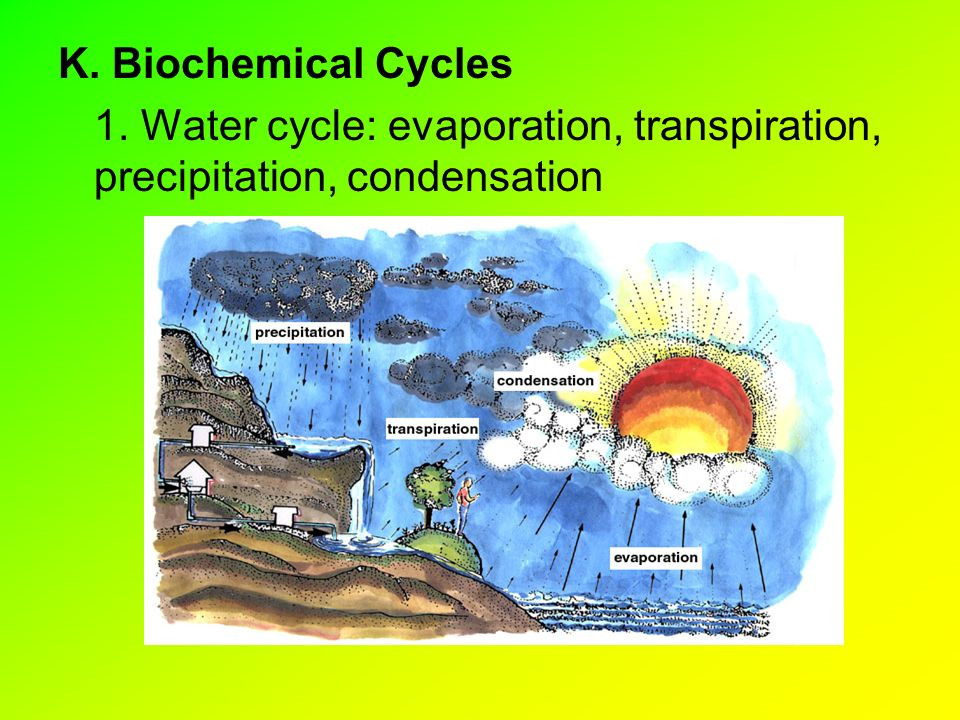 K. Biochemical Cycles 1. Water cycle: evaporation, transpiration, precipitation, condensation