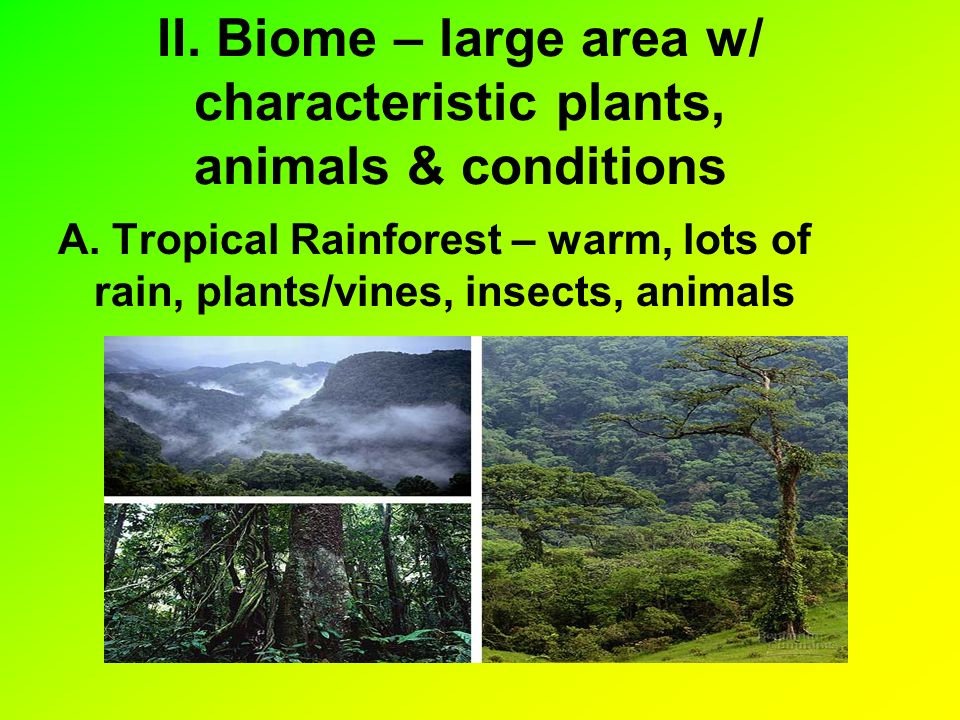 II. Biome – large area w/ characteristic plants, animals & conditions