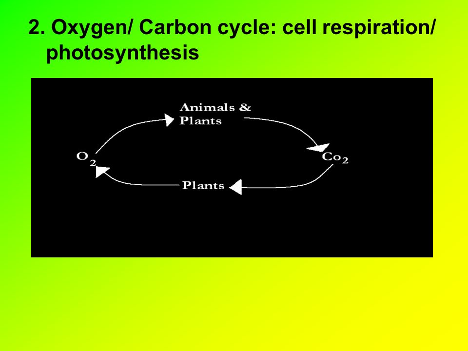 2. Oxygen/ Carbon cycle: cell respiration/ photosynthesis