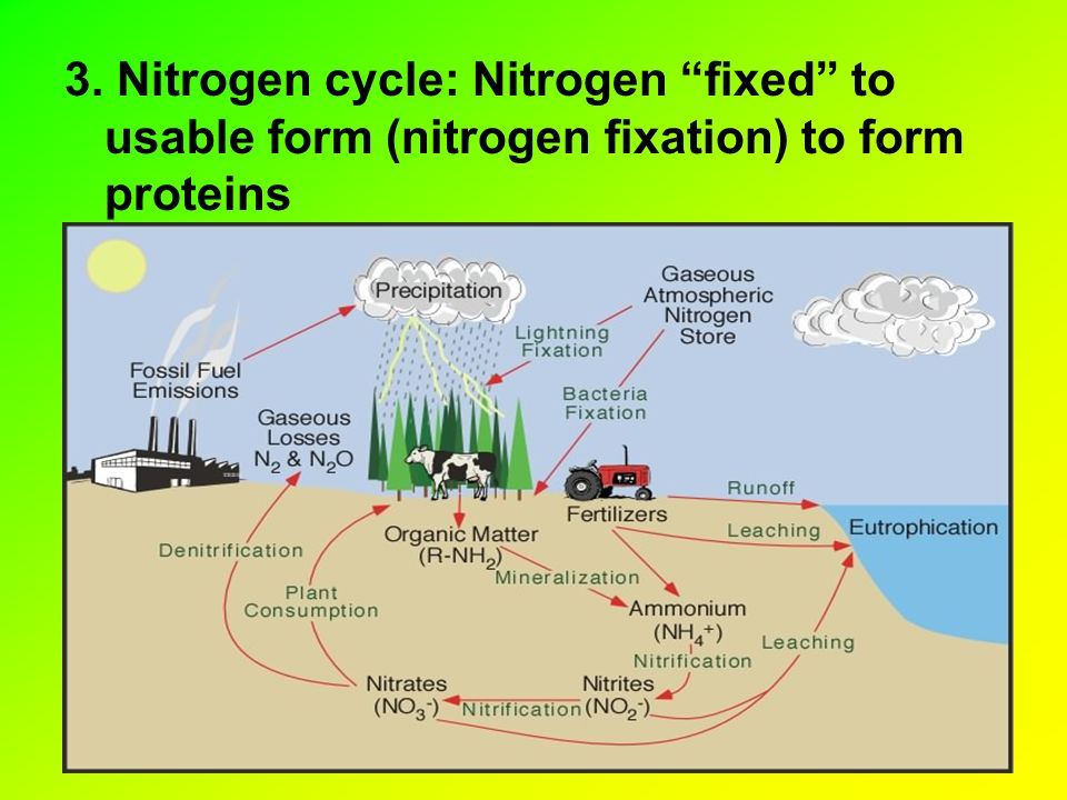 3. Nitrogen cycle: Nitrogen fixed to usable form (nitrogen fixation) to form proteins