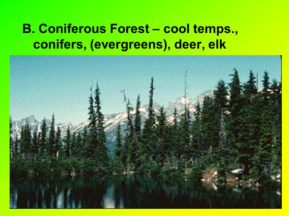 B. Coniferous Forest – cool temps., conifers, (evergreens), deer, elk