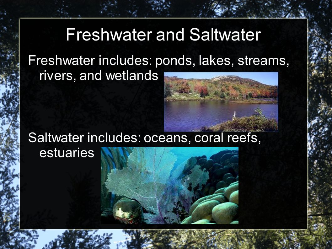 Freshwater and Saltwater