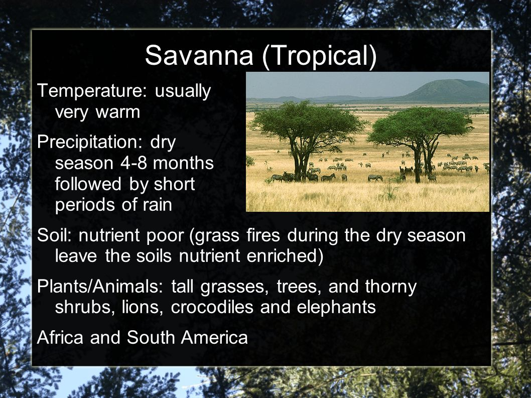 Savanna (Tropical) Temperature: usually very warm