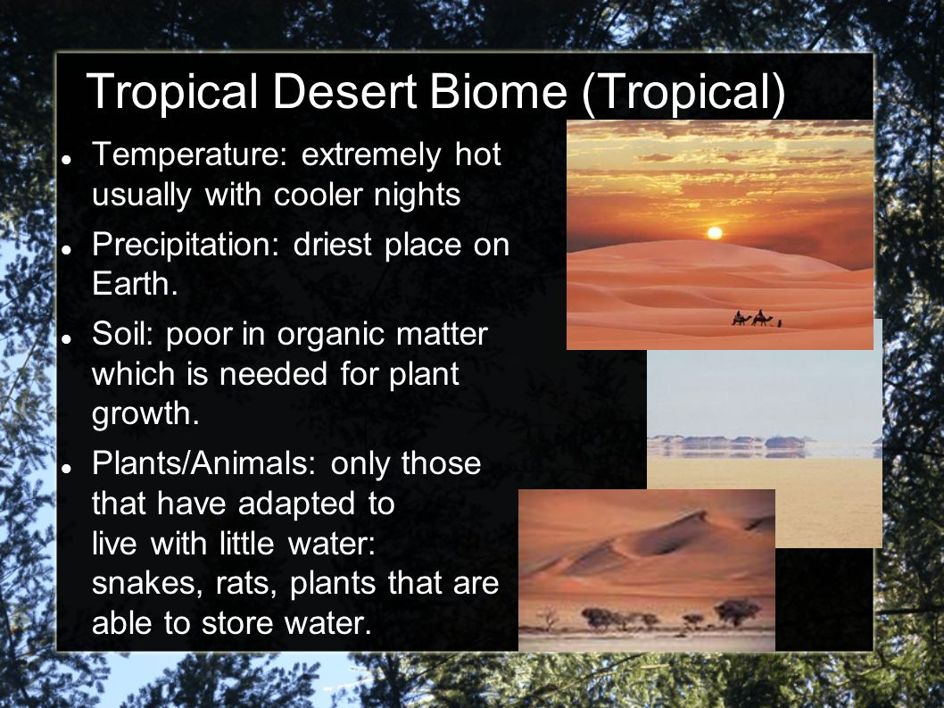 Tropical Desert Biome (Tropical)