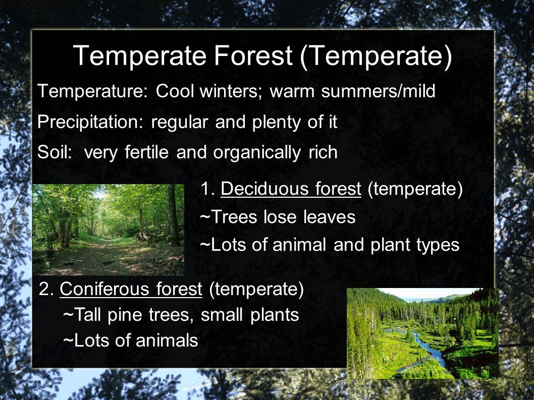 Temperate Forest (Temperate)