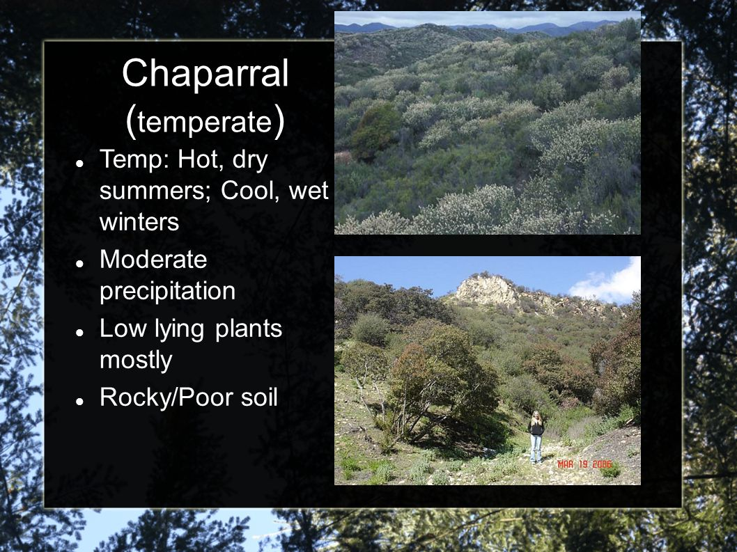 Chaparral (temperate)