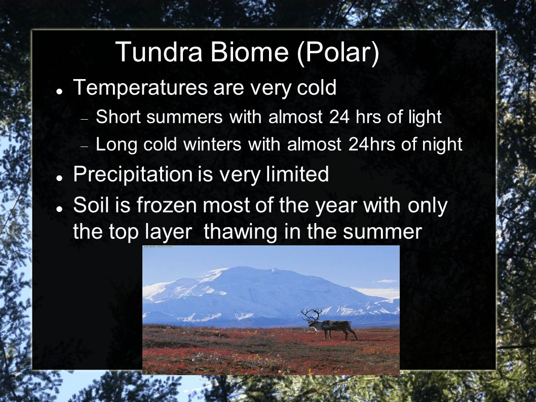 Tundra Biome (Polar) Temperatures are very cold